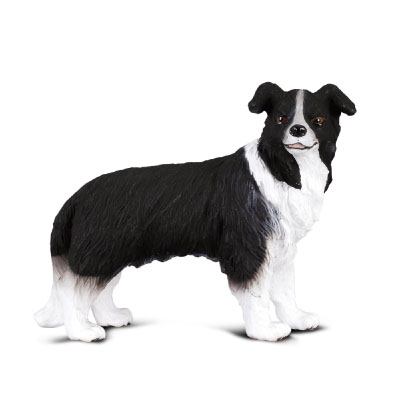 Border Collie - 88010