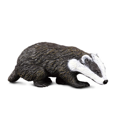 Eurasian Badger - 88015