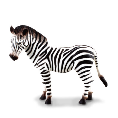 Common Zebra - 88032