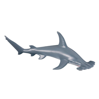 Scalloped Hammerhead Shark - 88045