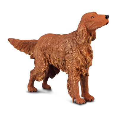 Irish Red Setter - 88068