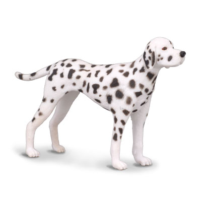Dalmatian - cats-and-dogs