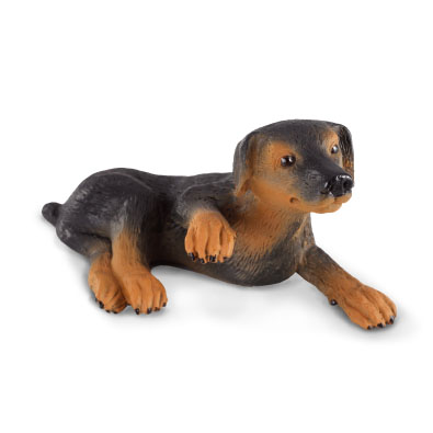 Doberman Pinscher Puppy  - 88087