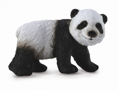 Giant Panda Cub - Standing - asia-and-australasia