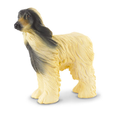 Afghan Hound - cats-and-dogs