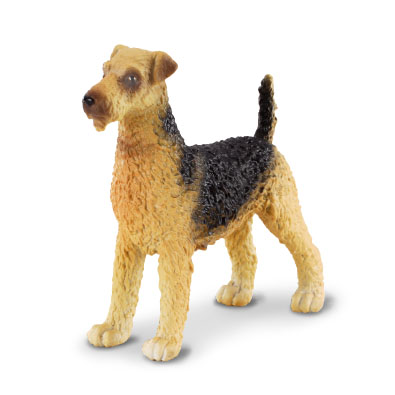 Terrier de Airedale - cats-and-dogs