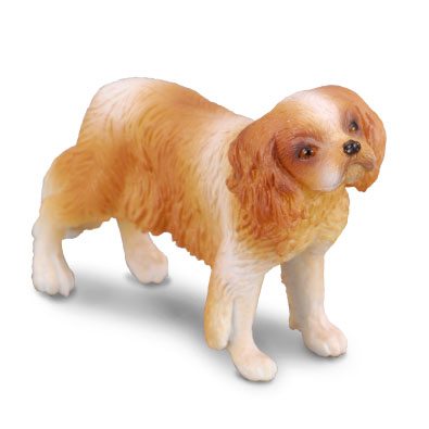 Cavalier King Charles Spaniel - cats-and-dogs