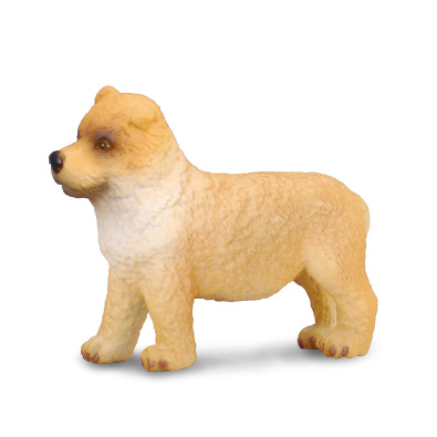 Chow Chow Puppy - 88184