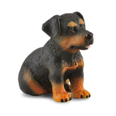 Rottweiler Puppy  - cats-and-dogs