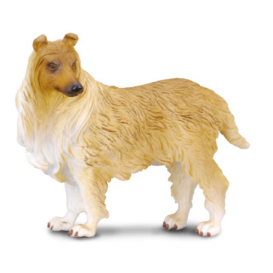 Rough Haired Collie - 88191