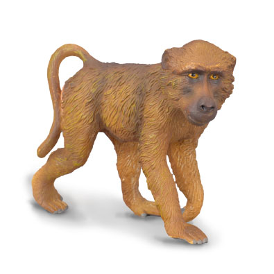 Baboon Male