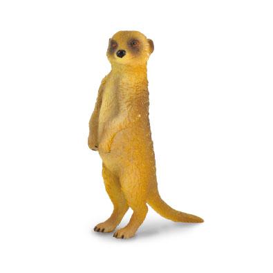 Meerkat - Standing
