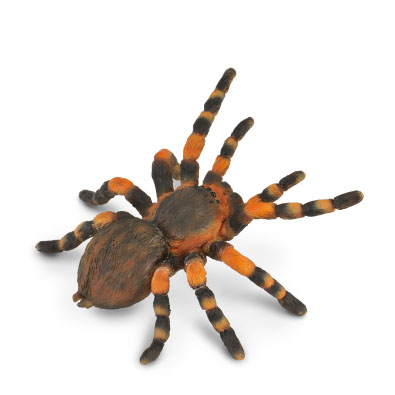 Mexican Redknee Tarantula - insects-and-spiders