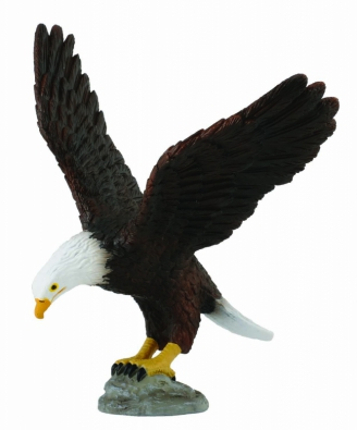 American Bald Eagle - north-america