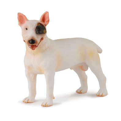 Bull Terrier - Male - cats-and-dogs