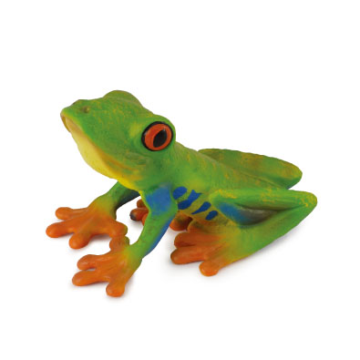 Red-eyed Tree Frog - 88386