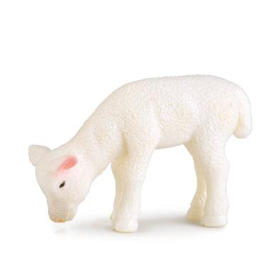 小羊 - 吃草