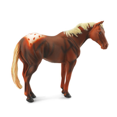 Chestnut Appaloosa Stallion - 88436