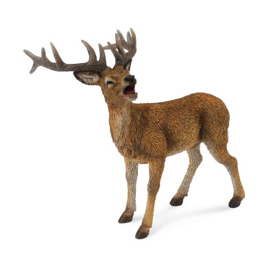Red Deer Stag - europe