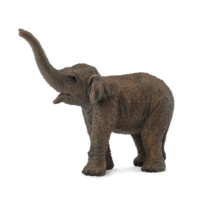 Asian Elephant Calf - 88487