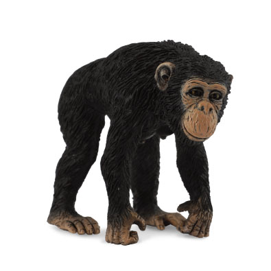 Chimpanzee Female - 88493