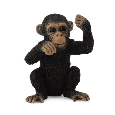Chimpanzee Cub - Thinking - 88495