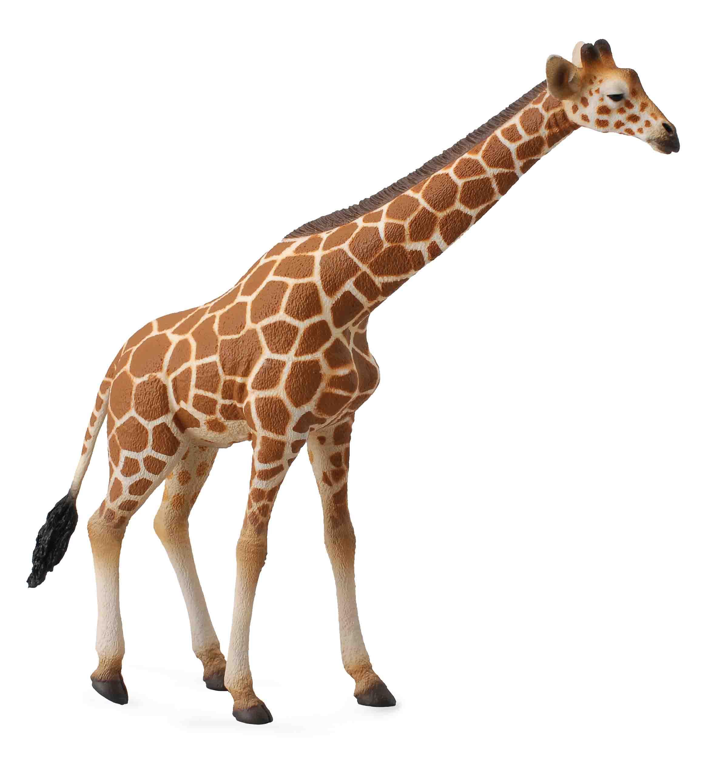 Dogs  Cats  Giraffe