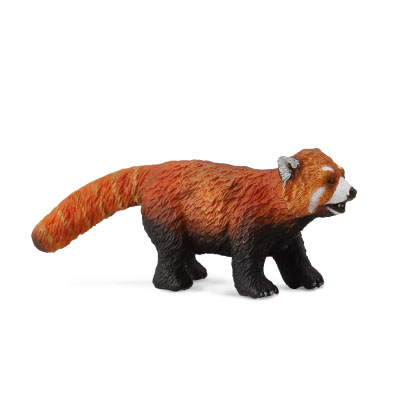 Red Panda - asia-and-australasia