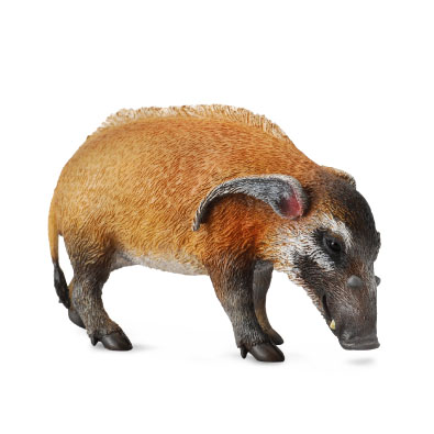 Red River Hog - africa