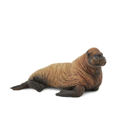 Walrus Calf - polar-regions