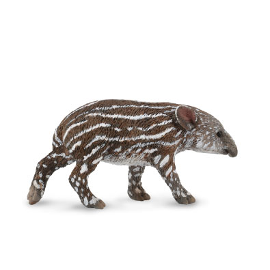 Baird's Tapir Calf - south-america