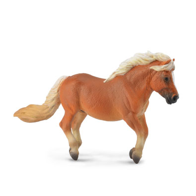Shetland Pony Chestnut