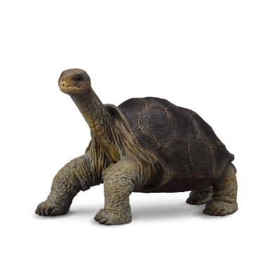 Pinta Island Tortoise (Lonesome George) - south-america