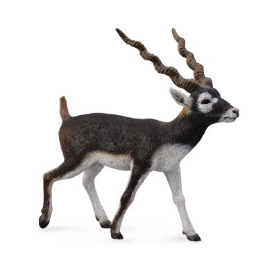 Blackbuck - 88638