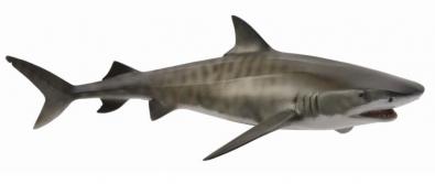 虎鲨 (鼬鲨)