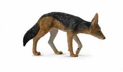 Black-Backed Jackal - 88665