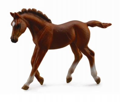 Thoroughbred foal Walking - Chestnut - 88670