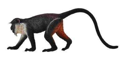黛安娜长尾猴