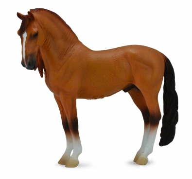 Campolina Stallion - Red Dun  - 88701