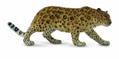 Leopardo del Amur - asia-and-australasia