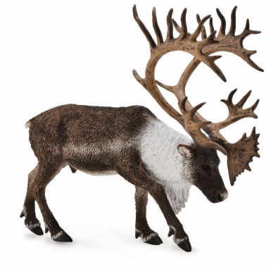 Woodland Caribou  - north-america