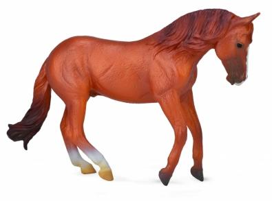 Australian Stock Horse Stallion -  Chestnut