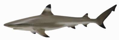 Blacktip Reef Shark  - 88726