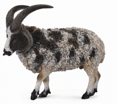Jacob Sheep  - 88728