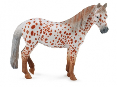 British Spotted Pony Mare – Chestnut Leopard  - 88750