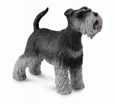 Schnauzer - cats-and-dogs