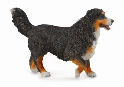 Bernese Mountain Dog - 88801