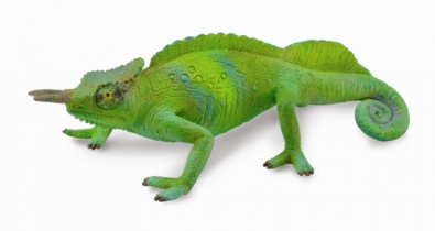 Cameroon Sailfin Chameleon - reptiles-and-amphibians
