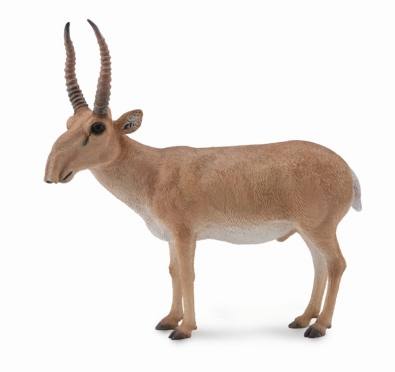 Antilope saiga - asia-and-australasia