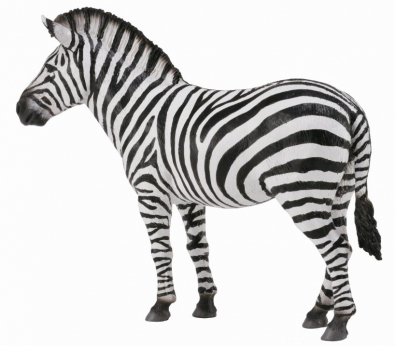 Common Zebra  - 88830